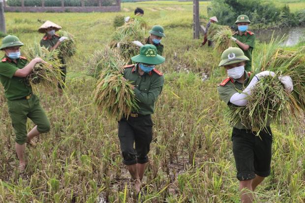 Vĩnh Phúc: Đoàn viên, công an giúp các gia đình bị cách ly y tế thu hoạch lúa chín - Ảnh 1.