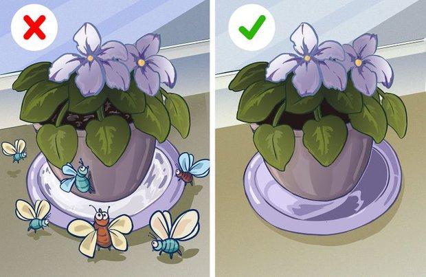 8 sai sót khiến côn trùng làm tổ trong nhà bạn, đuổi mãi cũng không hết - Ảnh 7.