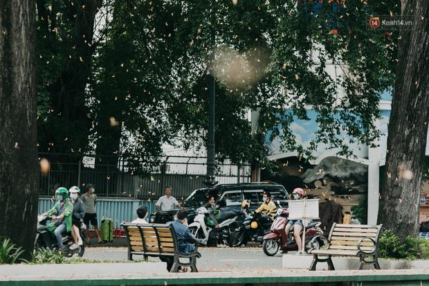 Sài Gòn mùa hoa dầu bay thống trị khắp phố: Giới trẻ check-in đẹp thổn thức, nhưng cô chú lao công chắc cực lắm à nghen! - Ảnh 2.