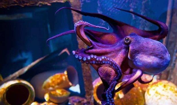 Vì sao bạch tuộc bị nghi ngờ là sinh vật ngoài hành tinh? - Ảnh 2.