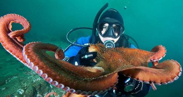 Vì sao bạch tuộc bị nghi ngờ là sinh vật ngoài hành tinh? - Ảnh 4.
