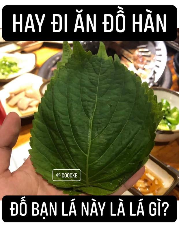 Ăn món Hàn đó giờ nhưng chưa chắc bạn biết tên của loại lá này: 90% người Việt nhầm lẫn với tía tô, giá bán không rẻ tí nào - Ảnh 1.
