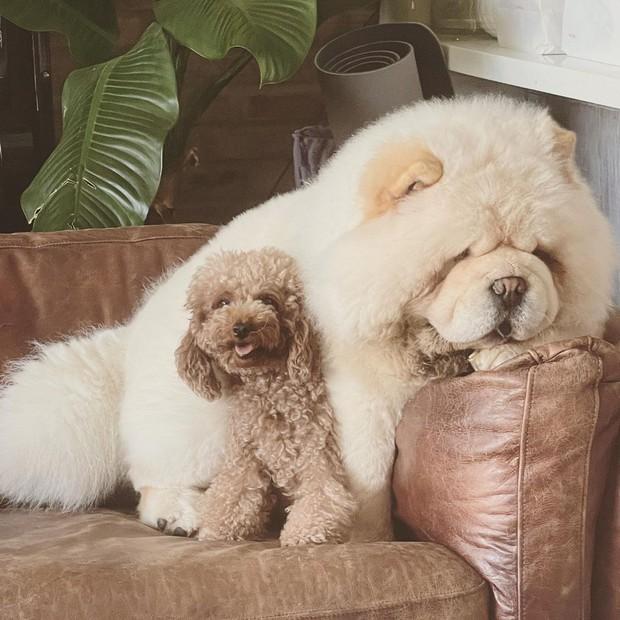 Châu Bùi đăng ảnh I Love You mừng sinh nhật Binz, có cameo chung vui là con chó từng nuôi với Decao - Ảnh 5.