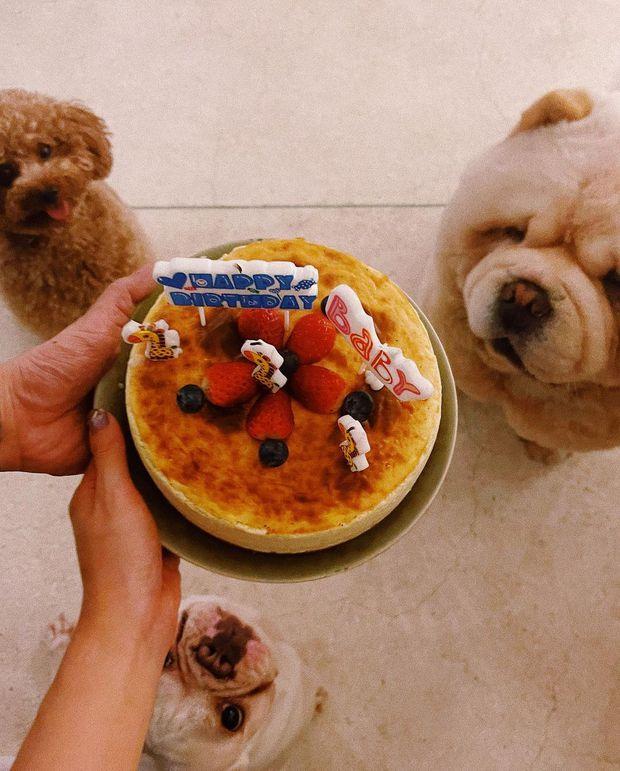 Châu Bùi đăng ảnh I Love You mừng sinh nhật Binz, có cameo chung vui là con chó từng nuôi với Decao - Ảnh 3.