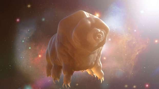 Khoa học vừa làm một thí nghiệm kinh hoàng với sinh vật bất tử duy nhất của Trái đất, và hãy xem chuyện gì đã xảy ra - Ảnh 1.