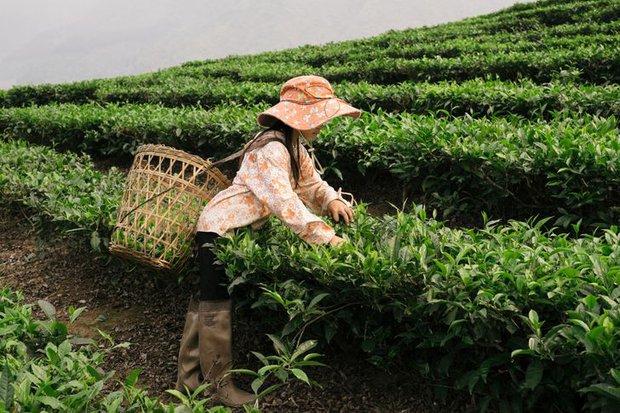 Chu du châu Á 210 ngày, nhiếp ảnh gia Ukraine đặc biệt phải lòng Việt Nam, tung bộ ảnh 3 miền non nước đẹp đến mê hoặc - Ảnh 16.