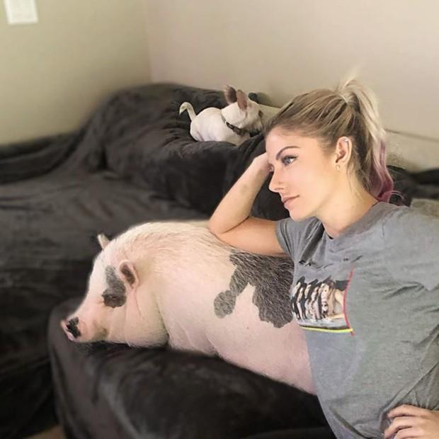 Mỹ nhân làng WWE tan nát sau khi chú lợn cưng không may qua đời, tố cơ sở thú y từ chối cứu chữa vì vật nuôi quá to - Ảnh 2.