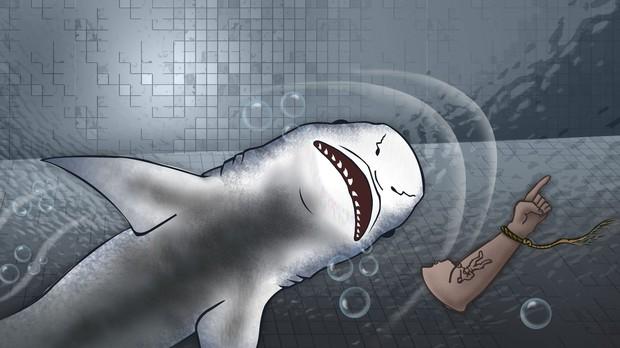 Bắt đầu từ... bãi nôn của một con cá mập, cảnh sát bất ngờ phát hiện ra vụ án mạng kỳ lạ bậc nhất lịch sử cùng cú twist không thể tin nổi - Ảnh 1.