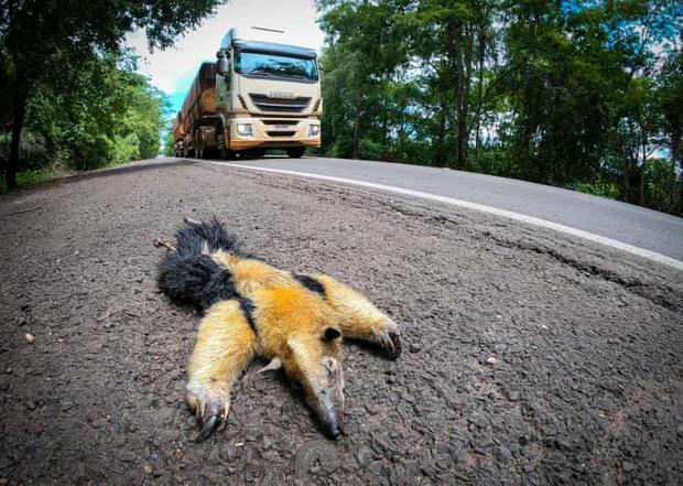 Con đường chết chóc nhất: Mỗi năm 3000 xác chết tại xa lộ tử thần của Brazil, cái giá quá đắt mà thiên nhiên phải trả vì con người - Ảnh 1.