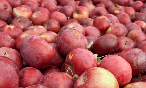 Không phải cà rốt, gan lợn hay gấc, đây mới là 4 loại thực phẩm quen thuộc bồi bổ cho mắt tốt nhất - Ảnh 3.