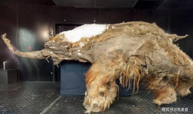 Siberia xuất hiện những sinh vật tiền sử từ 40 nghìn năm trước, các chuyên gia nghiên cứu: Đây không phải là tín hiệu tốt - Ảnh 2.
