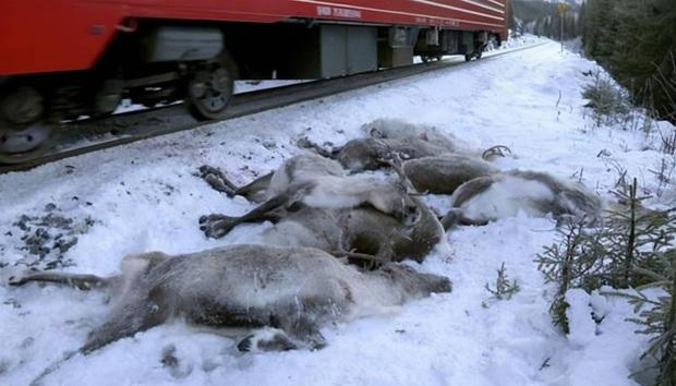 Siberia xuất hiện những sinh vật tiền sử từ 40 nghìn năm trước, các chuyên gia nghiên cứu: Đây không phải là tín hiệu tốt - Ảnh 5.