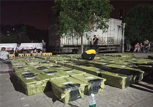Hộp mù chuyển phát động vật: Góc khuất giao hàng kinh dị và tàn nhẫn đáng sợ ở Trung Quốc - Ảnh 3.