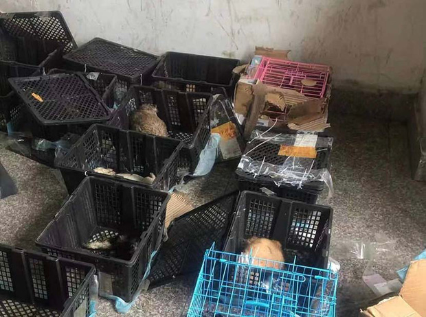Hộp mù chuyển phát động vật: Góc khuất giao hàng kinh dị và tàn nhẫn đáng sợ ở Trung Quốc - Ảnh 5.