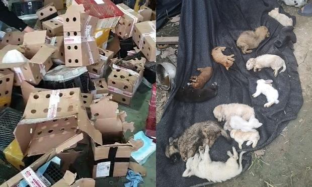 Hộp mù chuyển phát động vật: Góc khuất giao hàng kinh dị và tàn nhẫn đáng sợ ở Trung Quốc - Ảnh 6.