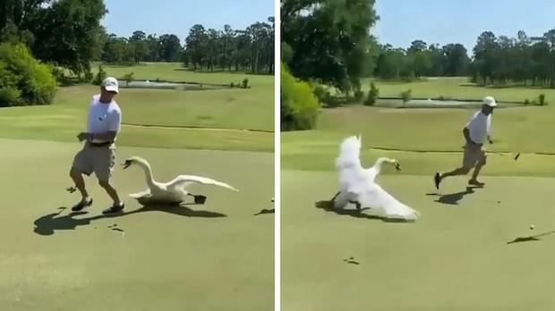 Vừa chọt được bóng vào lỗ, golfer chạy trối chết vì bị một loài vật xinh đẹp tấn công - Ảnh 2.