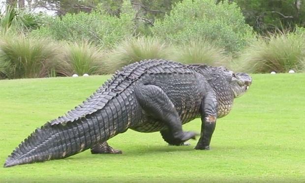 Vừa chọt được bóng vào lỗ, golfer chạy trối chết vì bị một loài vật xinh đẹp tấn công - Ảnh 3.