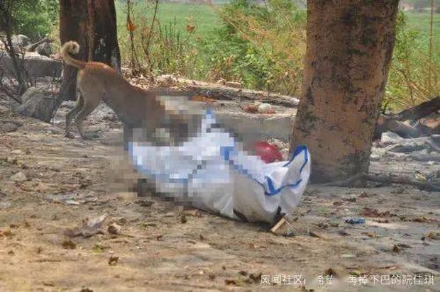 Thẩm phán Ấn Độ qua đời vì Covid-19, thi thể bị chó hoang cắn xé khi đang chờ hỏa táng - Ảnh 1.