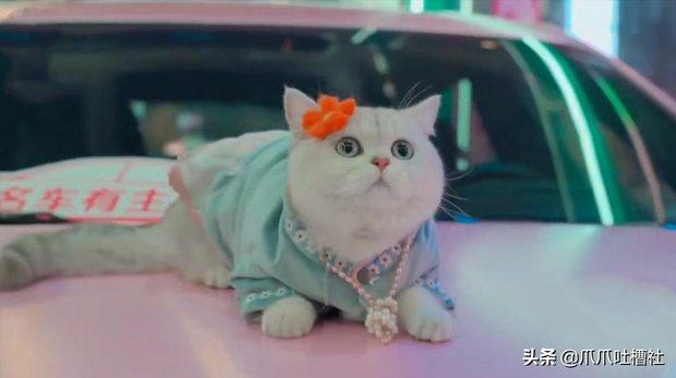 Chú mèo chuyên nằm nóc xe hơi chỉ chơi với ngủ nhận 50 triệu đồng/ buổi giúp sen đổi đời - Ảnh 3.