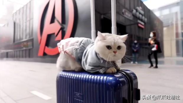 Chú mèo chuyên nằm nóc xe hơi chỉ chơi với ngủ nhận 50 triệu đồng/ buổi giúp sen đổi đời - Ảnh 5.
