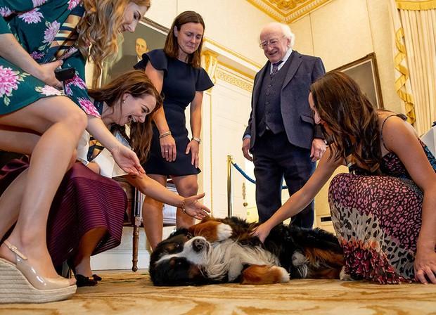 Chó cưng của Tổng thống Ireland càn quét MXH vì màn phá rối chủ nhân đáng yêu chịu không nổi ngay trên sóng trực tiếp quan trọng - Ảnh 6.