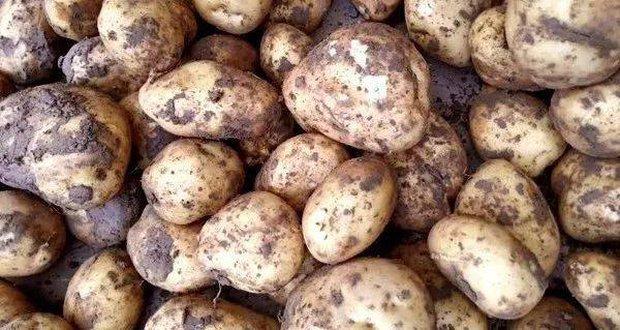 3 loại khoai tây chớ nên mua và 3 lưu ý khi ăn nó, đừng dại mà mắc phải kẻo mang bệnh vào người - Ảnh 5.