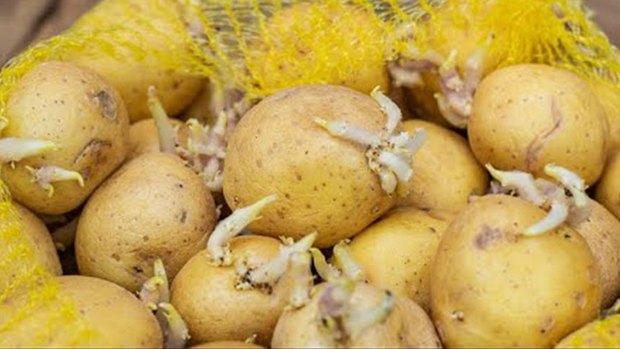 3 loại khoai tây chớ nên mua và 3 lưu ý khi ăn nó, đừng dại mà mắc phải kẻo mang bệnh vào người - Ảnh 3.