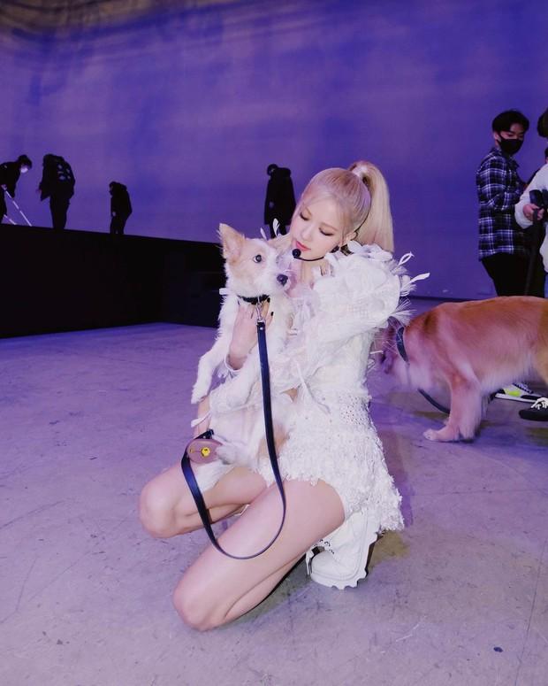 Rosé đi đâu cũng mang theo phụ kiện dọn dẹp nỗi buồn cho cún cưng, từ 20k bạn cũng sắm được chiếc na ná - Ảnh 1.