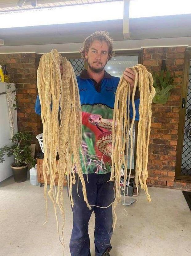 Kiểm tra tầng gác mái, người đàn ông thất kinh bạt vía khi thấy 50 tấm da rắn khô rang, phát hiện tiếp theo còn kinh dị hơn - Ảnh 3.