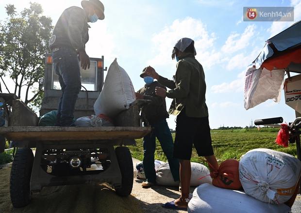 Ảnh: Tình nguyện viên đội nắng nóng thu hoạch lúa cho người dân nơi tâm dịch Thuận Thành, Bắc Ninh - Ảnh 10.