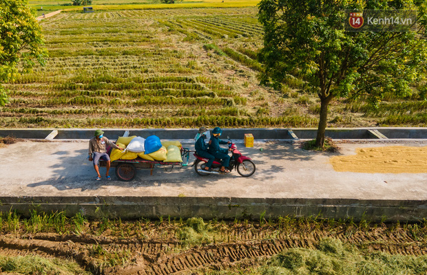 Ảnh: Tình nguyện viên đội nắng nóng thu hoạch lúa cho người dân nơi tâm dịch Thuận Thành, Bắc Ninh - Ảnh 11.