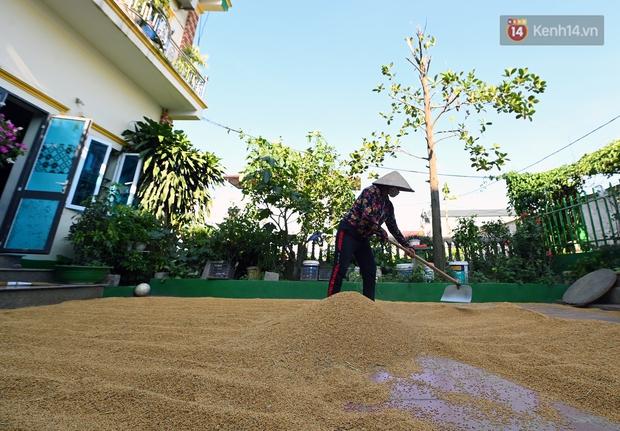 Ảnh: Tình nguyện viên đội nắng nóng thu hoạch lúa cho người dân nơi tâm dịch Thuận Thành, Bắc Ninh - Ảnh 14.