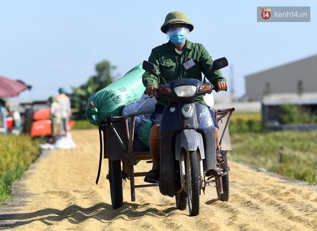 Ảnh: Tình nguyện viên đội nắng nóng thu hoạch lúa cho người dân nơi tâm dịch Thuận Thành, Bắc Ninh - Ảnh 15.