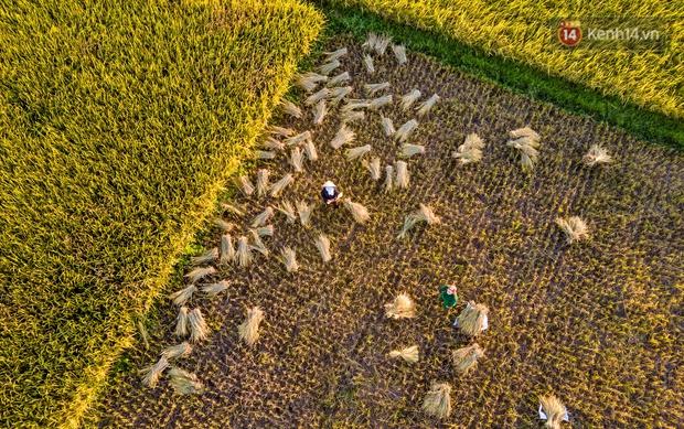 Ảnh: Tình nguyện viên đội nắng nóng thu hoạch lúa cho người dân nơi tâm dịch Thuận Thành, Bắc Ninh - Ảnh 17.