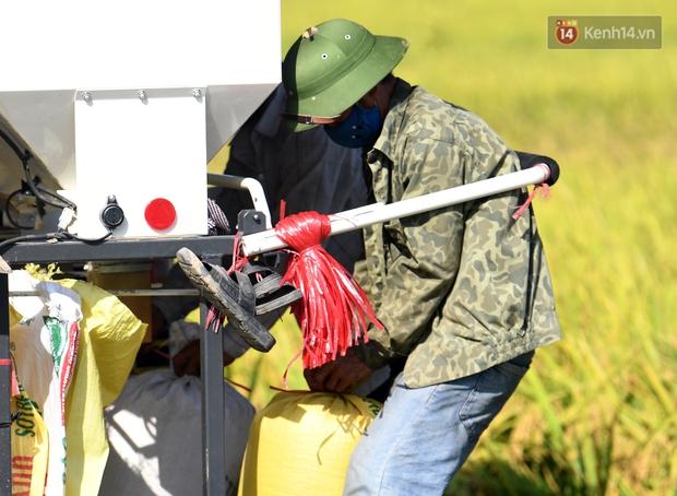 Ảnh: Tình nguyện viên đội nắng nóng thu hoạch lúa cho người dân nơi tâm dịch Thuận Thành, Bắc Ninh - Ảnh 4.