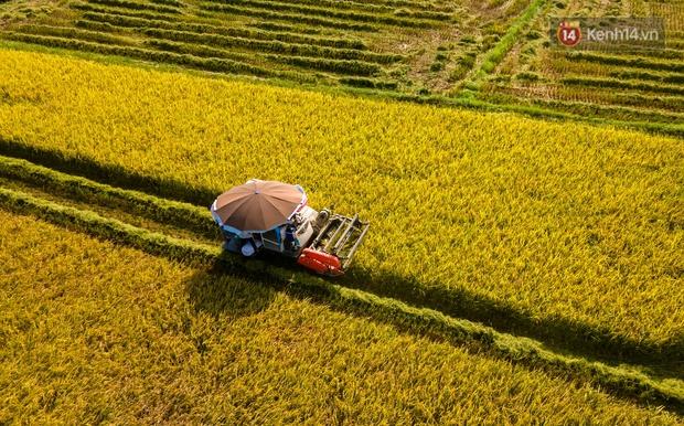 Ảnh: Tình nguyện viên đội nắng nóng thu hoạch lúa cho người dân nơi tâm dịch Thuận Thành, Bắc Ninh - Ảnh 5.