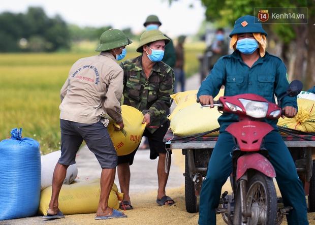 Ảnh: Tình nguyện viên đội nắng nóng thu hoạch lúa cho người dân nơi tâm dịch Thuận Thành, Bắc Ninh - Ảnh 7.