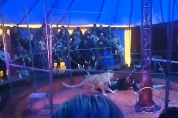 Video: Sư tử nổi điên tấn công nhân viên rạp xiếc, khán giả sợ hãi đến mức lên cơn động kinh - Ảnh 3.