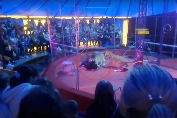 Video: Sư tử nổi điên tấn công nhân viên rạp xiếc, khán giả sợ hãi đến mức lên cơn động kinh - Ảnh 2.