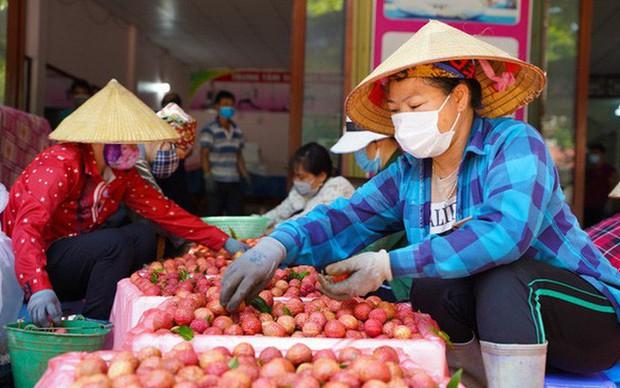 Hơn 98.000 tấn vải thiều Bắc Giang đã được tiêu thụ - Ảnh 1.