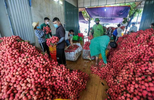 Bắc Giang đã tiêu thụ gần 110.000 tấn vải - Ảnh 1.