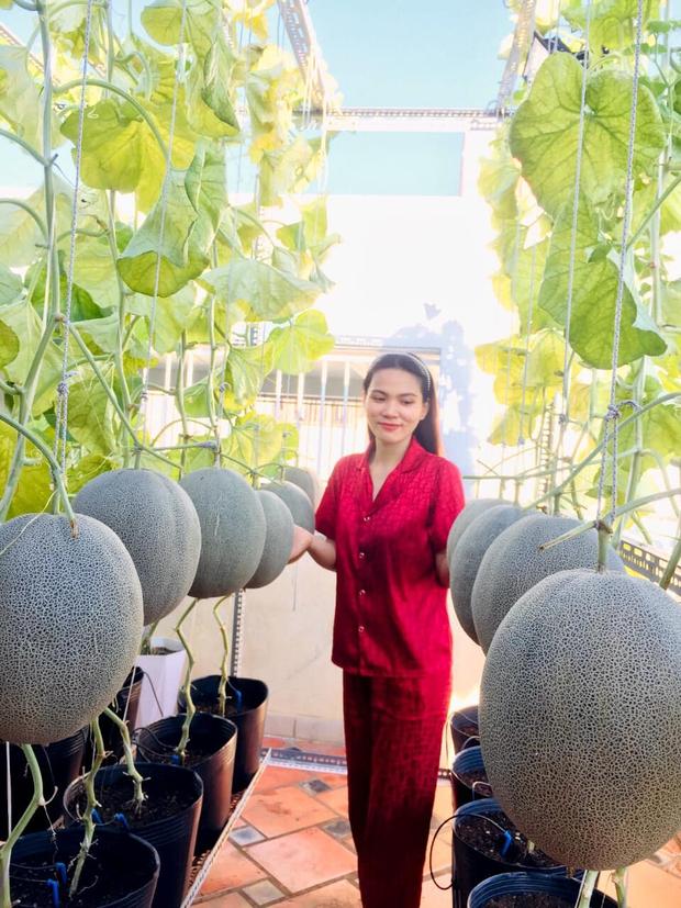 Cô gái phù phép sân thượng thành vườn dưa sai trĩu quả, quả nào quả nấy múp míp thấy mê - Ảnh 1.