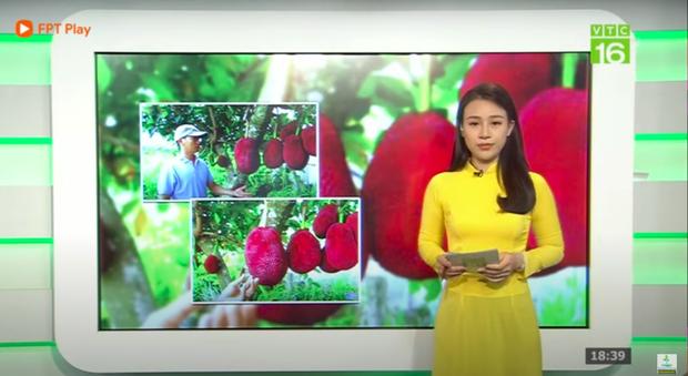 Thanh niên Trung Quốc khoe giống mít vỏ đỏ khiến dân mạng sửng sốt, ở Việt Nam cũng từng xuất hiện loại mít này nhưng thực hư thế nào? - Ảnh 6.