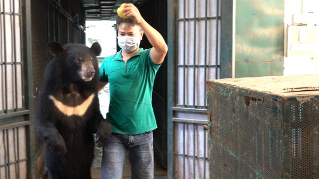 4 cá thể gấu cuối cùng ở Rạp xiếc Trung ương được cứu hộ - Ảnh 1.