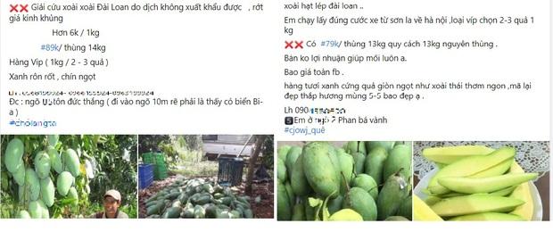 Nông sản rớt giá, nông dân miền Tây khóc thét vì giá xoài, mít chỉ còn 2.000 - 3.000 đồng/kg - Ảnh 3.