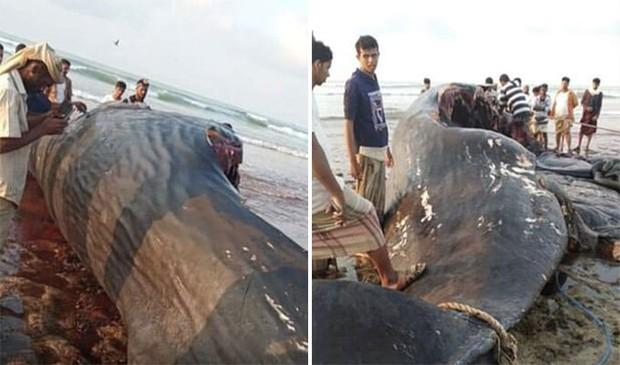 Đi đánh cá thấy vật đen sì hôi thối trên bãi biển, nhóm ngư dân không ngờ nhờ đó mà đổi đời kiếm được hơn 30 tỷ đồng - Ảnh 3.