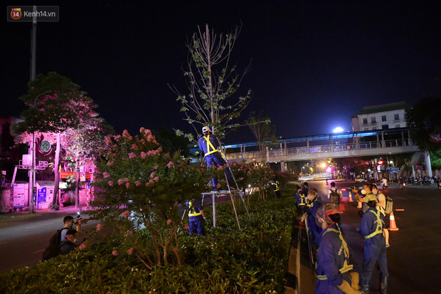 Ảnh: Di dời hàng cây phong lá đỏ trên 2 tuyến phố Hà Nội ngay trong đêm - Ảnh 2.