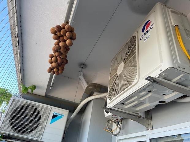 """Ngước lên cục nóng máy lạnh bỗng thấy """"mọc"""" ra chùm vải, cô gái nói một lý do đáo để khiến cả nhà bái phục - Ảnh 1."""