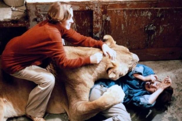 Thành viên ekip bị sư tử nhai đầu, nữ chính bị vồ suýt mất thị giác, cả trăm người bị thương trong bộ phim nguy hiểm nhất lịch sử - Ảnh 3.