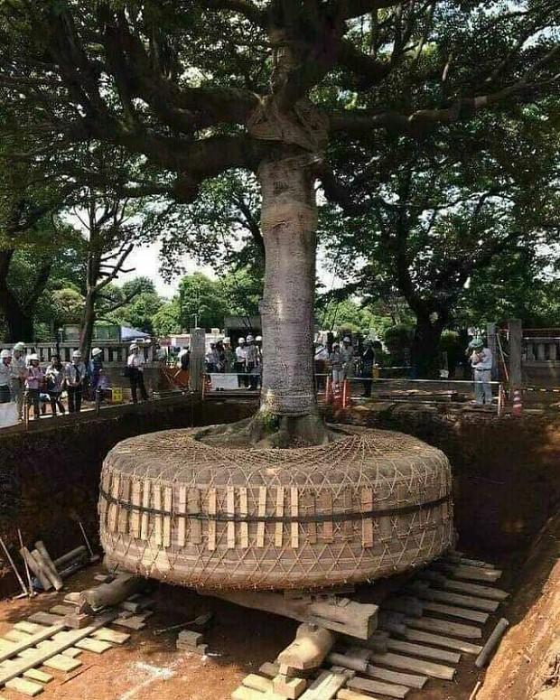 Khi được quay lại Nhật Bản, tôi sẽ sớm tìm bằng được những chỗ này để kiểm chứng: Đất nước gì kỳ lạ quá trời! - Ảnh 3.